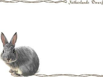 Netherland dwarf clipart.