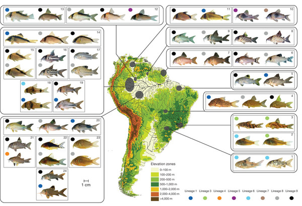 Competition and phylogeny determine community structure in.