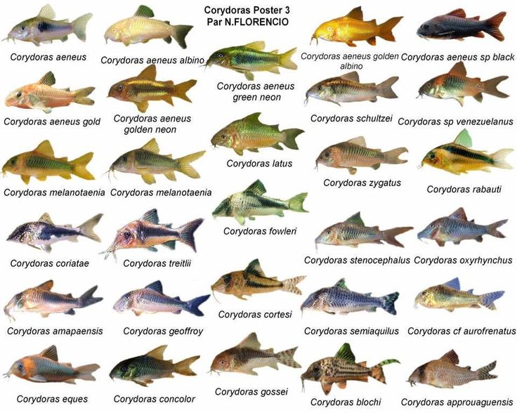 1000+ images about FISH.