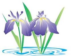 Dwarf Lake Iris clip art Free Vector.