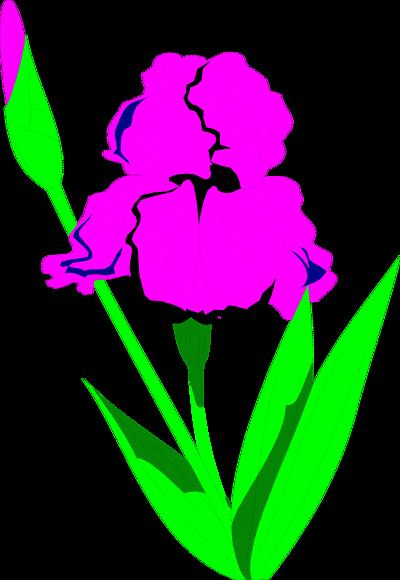 Free iris clip art.