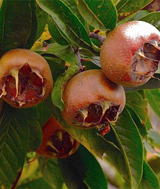 1000+ images about Fruit Trees on Pinterest.