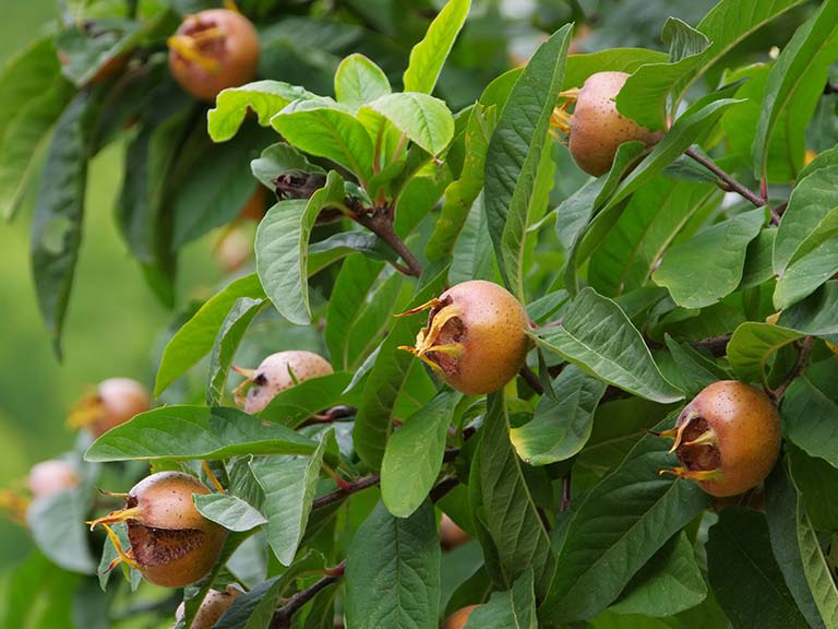 The best patio fruit trees.