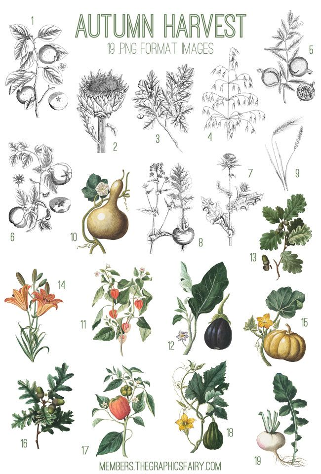 1000+ images about Fruit & Vegetable Art on Pinterest.