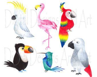 1000+ ideas about Tropical Birds on Pinterest.
