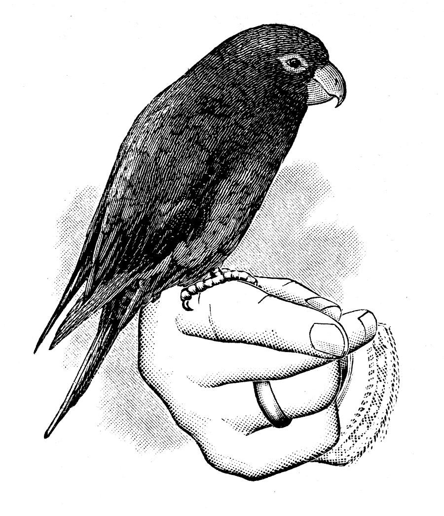 Victorian Clip Art.