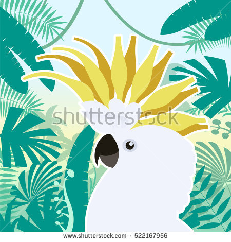 Cockatoo Stock Photos, Royalty.