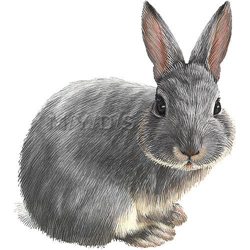 17 Best ideas about Rabbit Clipart 2017 on Pinterest.