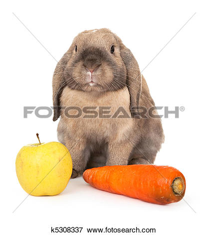 Picture of Dwarf rabbit with carrots and apple. k5308337.