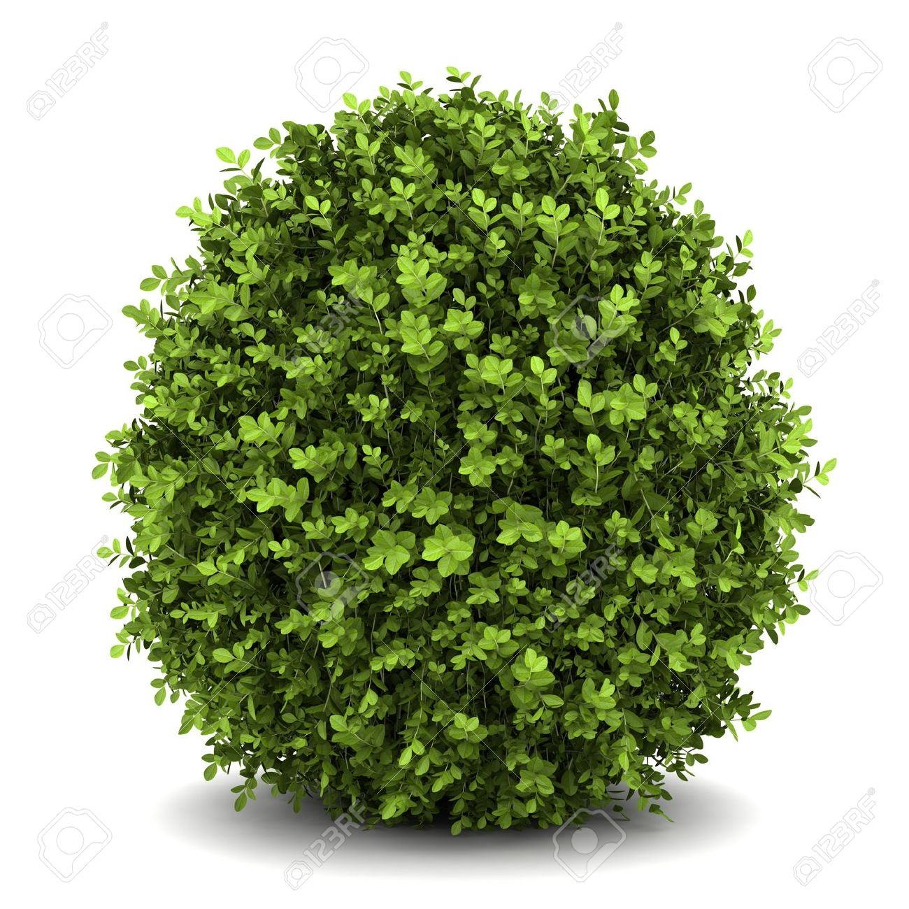 Dwarf Shrubs Images & Stock Pictures. Royalty Free Dwarf Shrubs.