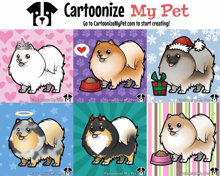1000+ ideas about Pomeranian Colors on Pinterest.