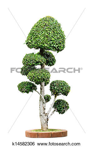 Stock Images of Dwarf tree isolated k14582306.