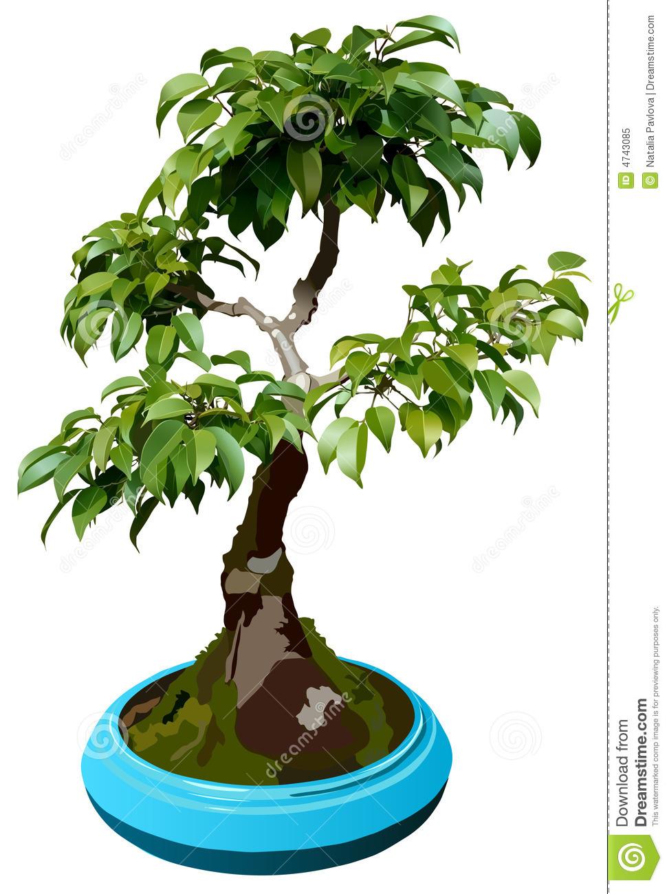 Illustration Of Dwarf Tree Royalty Free Stock Photo.