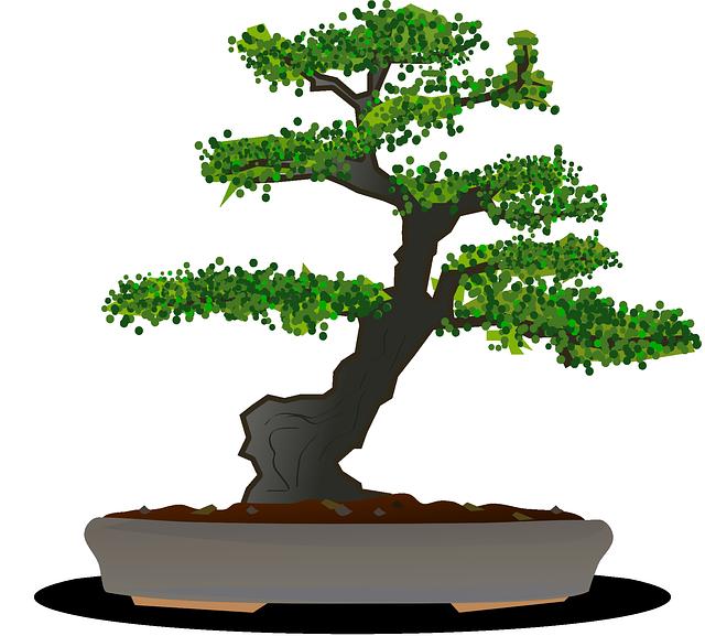 Free vector graphic: Bonsai, Tree, Dwarf Tree, Garden.