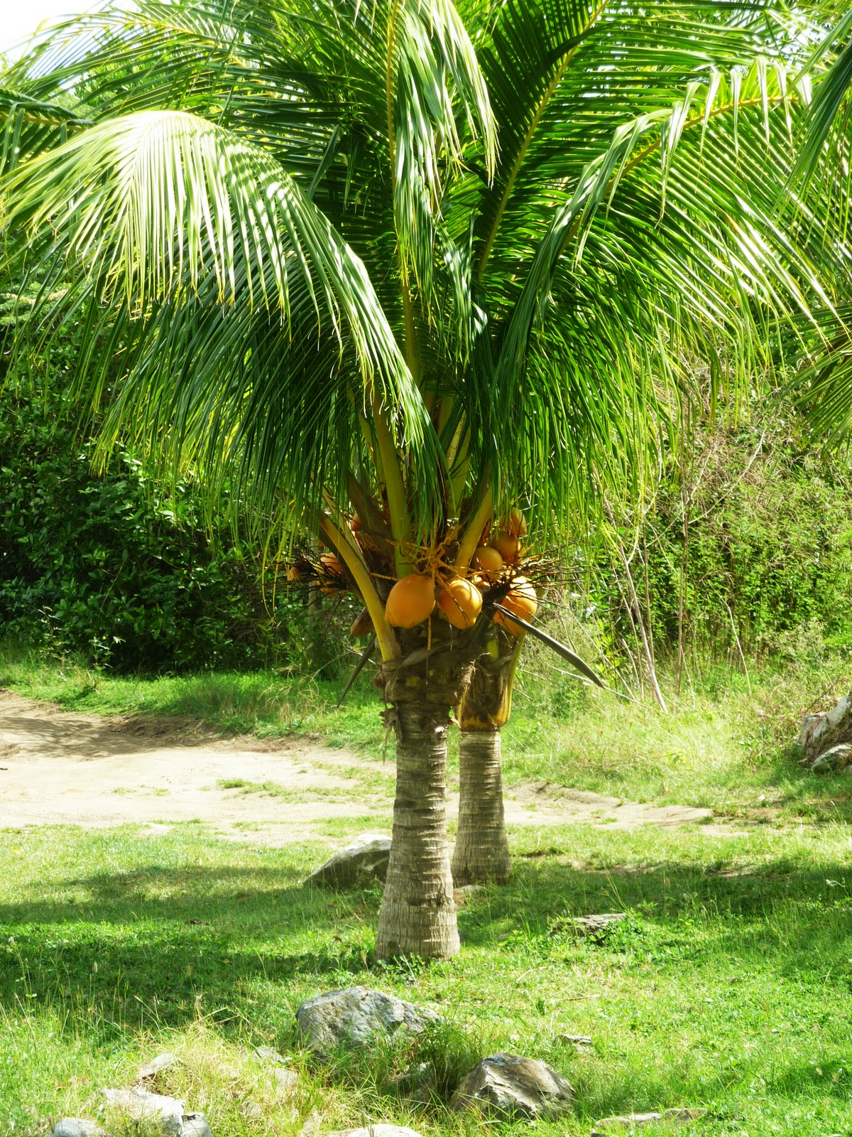 Dwarf Tree Clipart Clipground