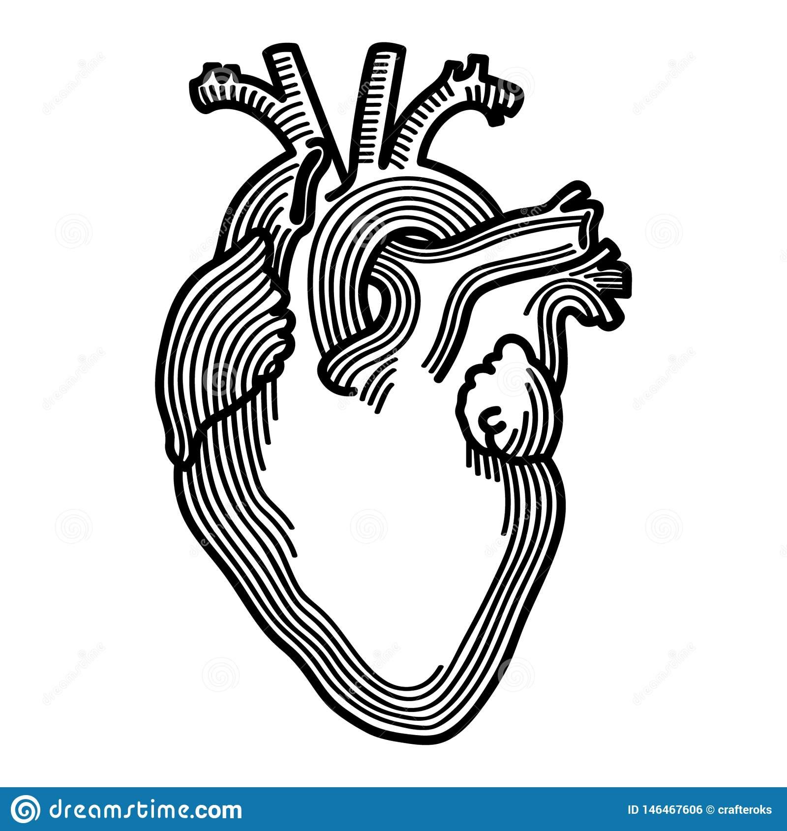 Anatomical Heart Hand Drawn Crafteroks Svg Free, Free Svg File, Eps.