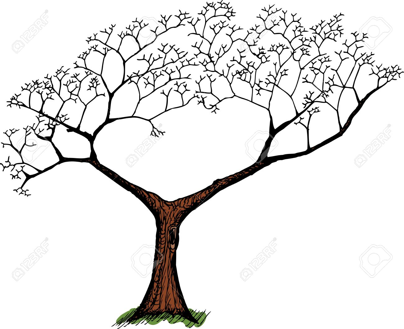 Cartoon Of Old Tree With Green Grass Over White Royalty Free.
