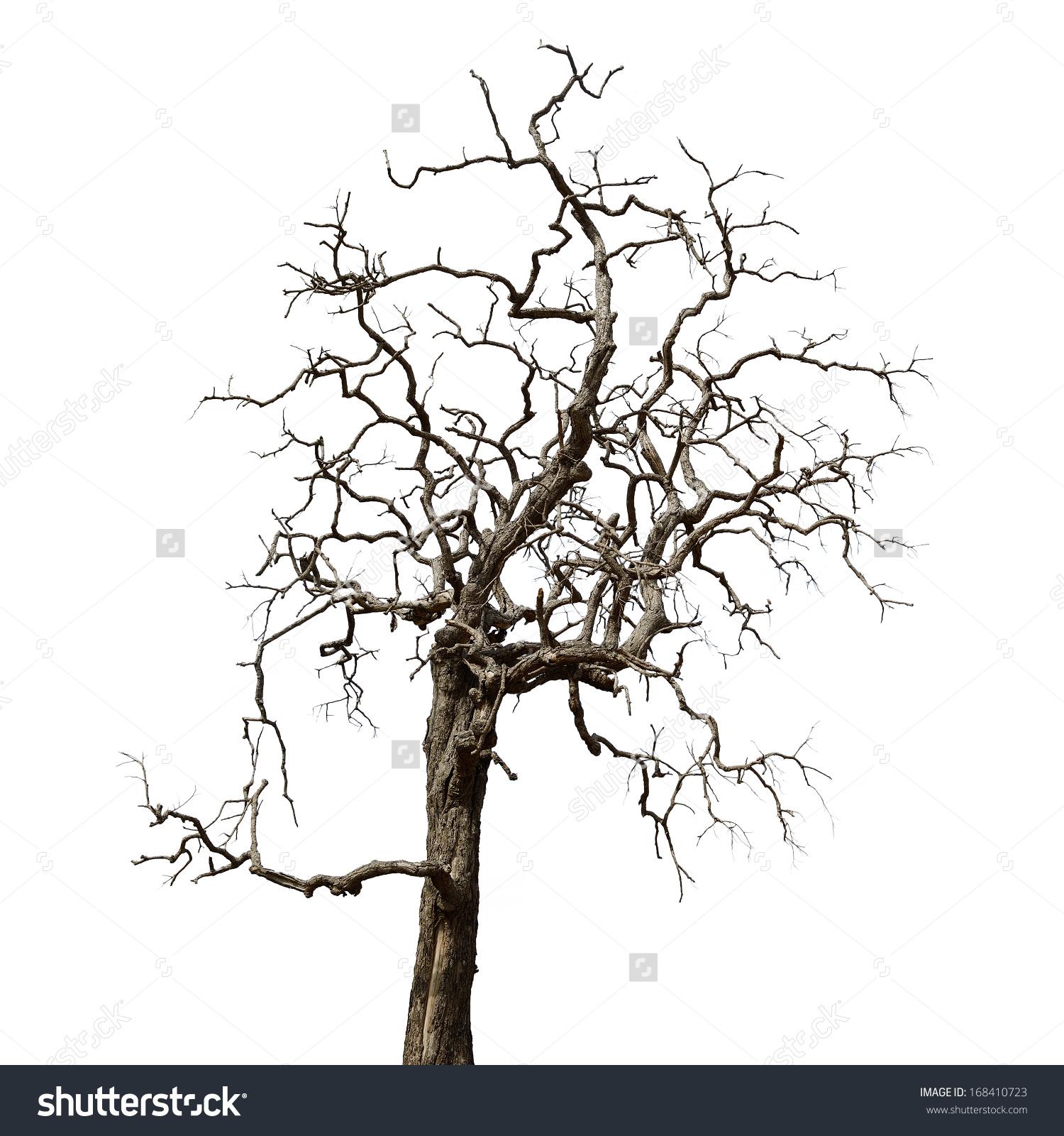 Dead sycamore tree clipart.