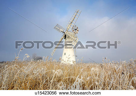 Stock Images of England, Norfolk, Thurne, Hoarfrost on reeds by.