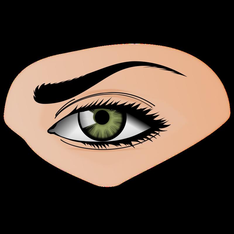 Eyes organ clipart.