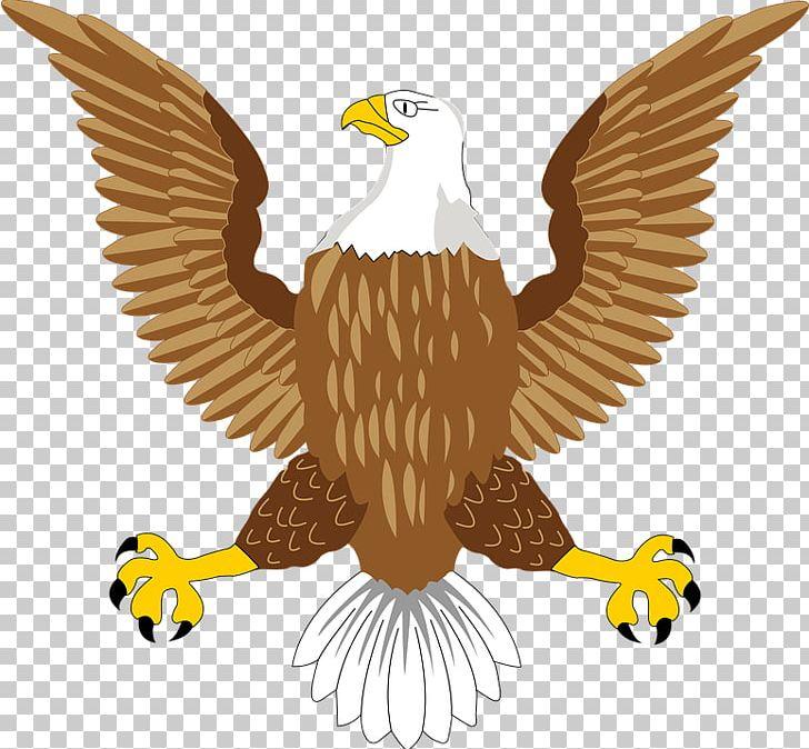 Bald Eagle Bird Symbol PNG, Clipart, Accipitriformes.