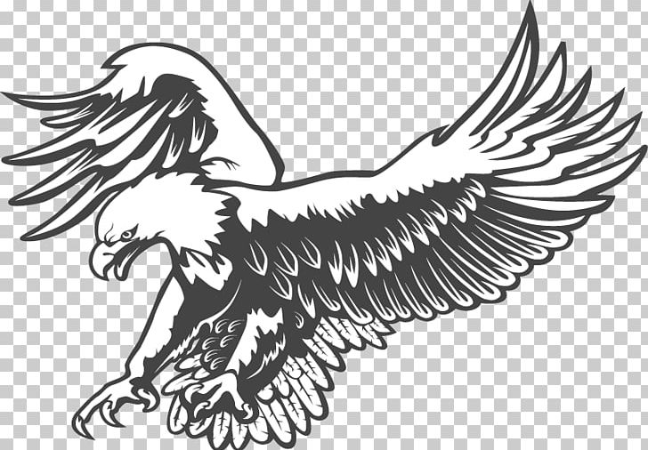 Bald Eagle Black And White Graphics PNG, Clipart, Animals, Artwork.