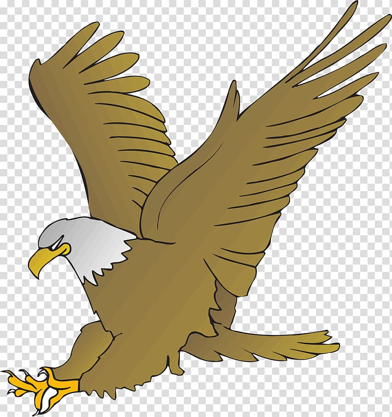 Bald Eagle Cartoon Drawing , eagle transparent background PNG.