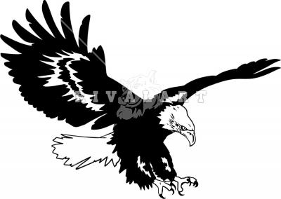 Soaring Eagle Clip Art & Soaring Eagle Clip Art Clip Art Images.