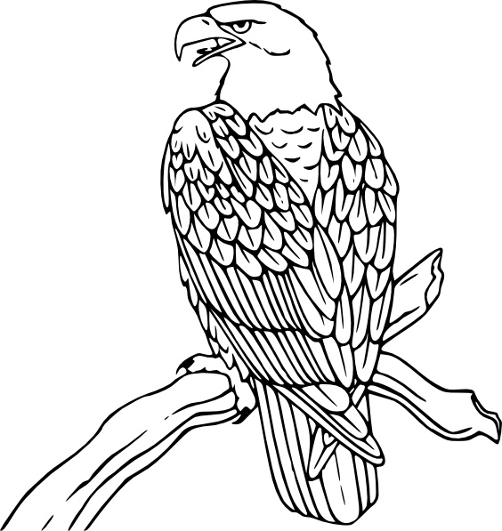1317 Bald Eagle free clipart.