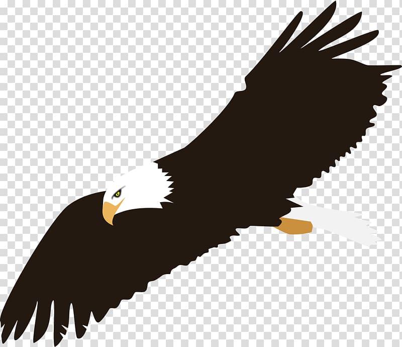 Bald Eagle Computer Icons , Eagle Background transparent.