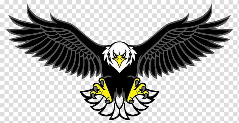 Bald Eagle Bird , Bird transparent background PNG clipart.