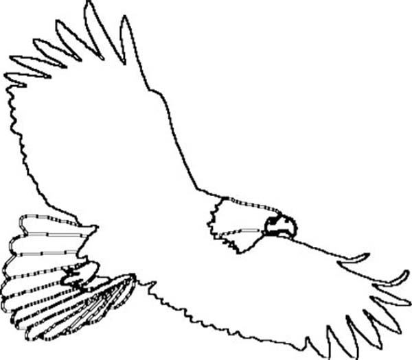 Free Outline Of Eagle, Download Free Clip Art, Free Clip Art.