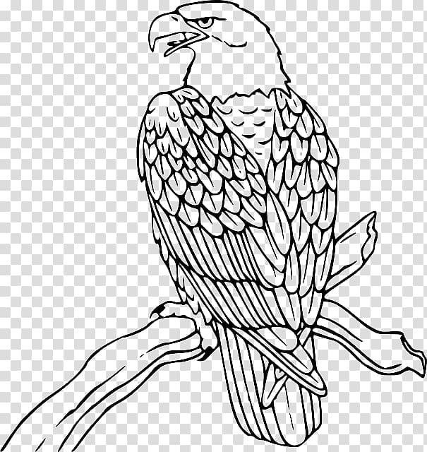 Bald Eagle Philippine Eagle , Outline Of Eagle transparent.