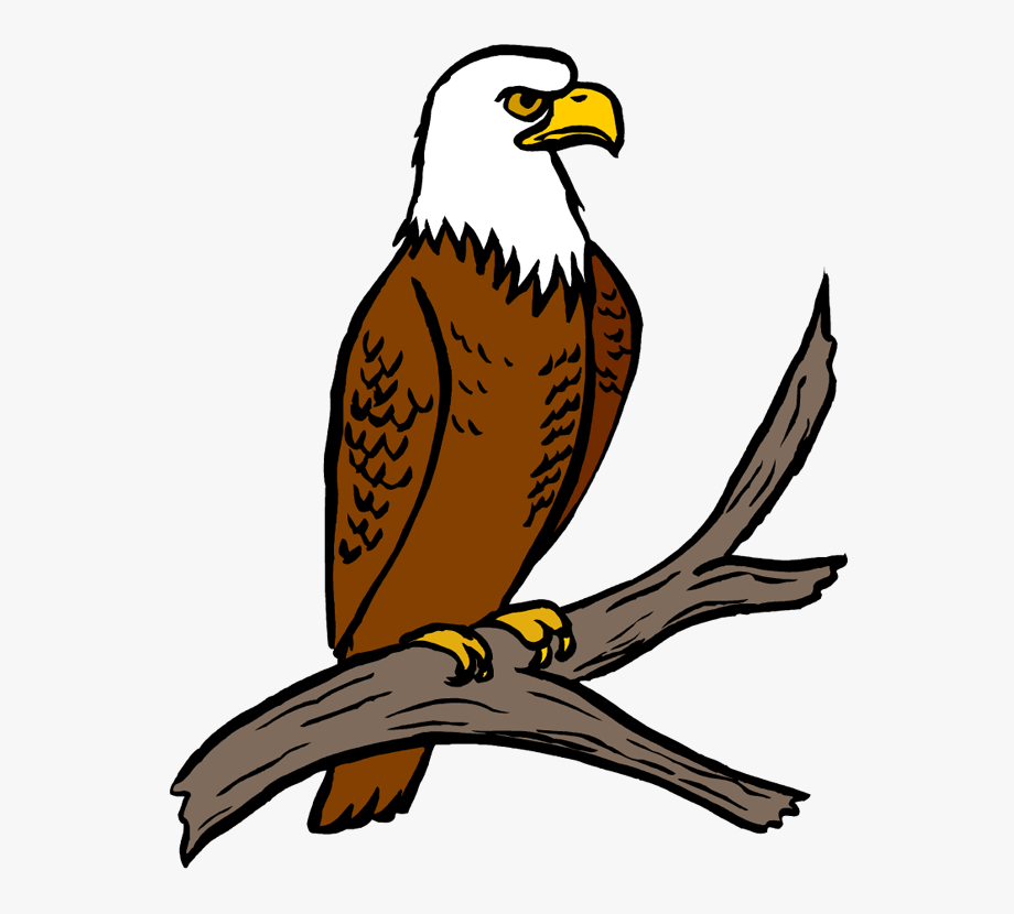 Free Eagle Clipart Eagle Feather Clipart At Getdrawings.