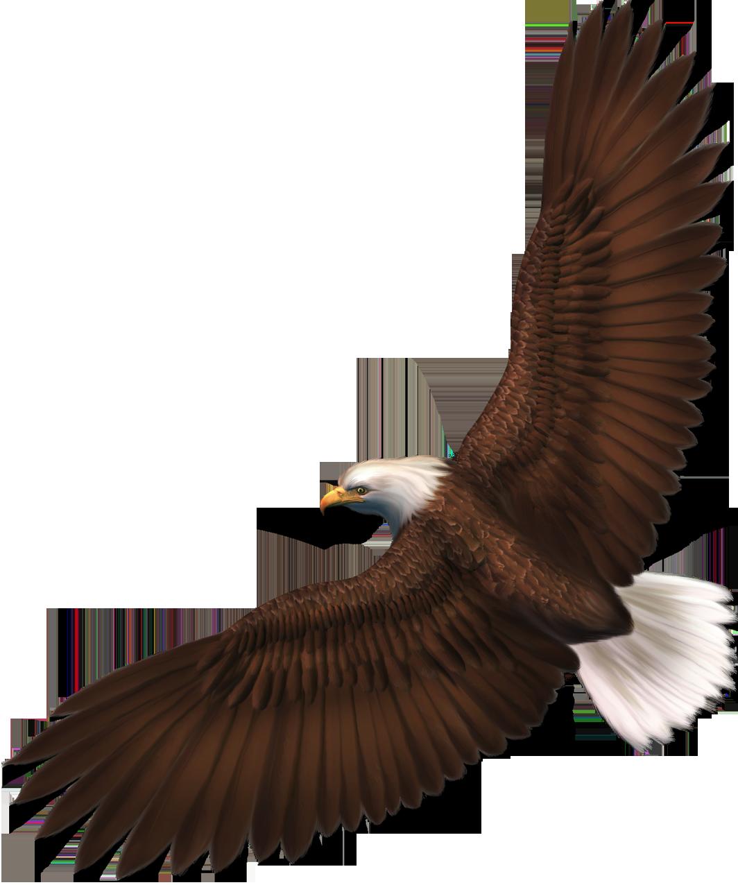 Transparent Eagle PNG Picture.