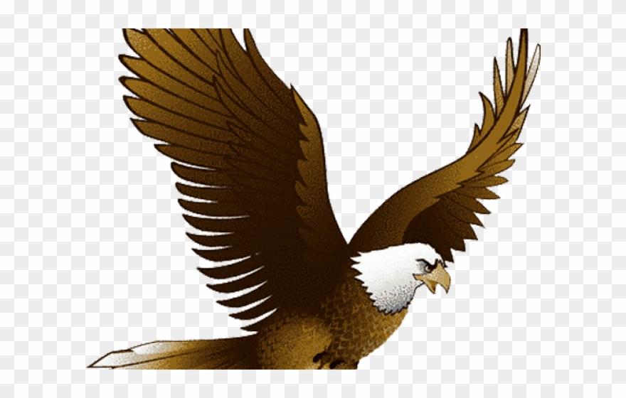 Bald Eagle Clipart Traceable.