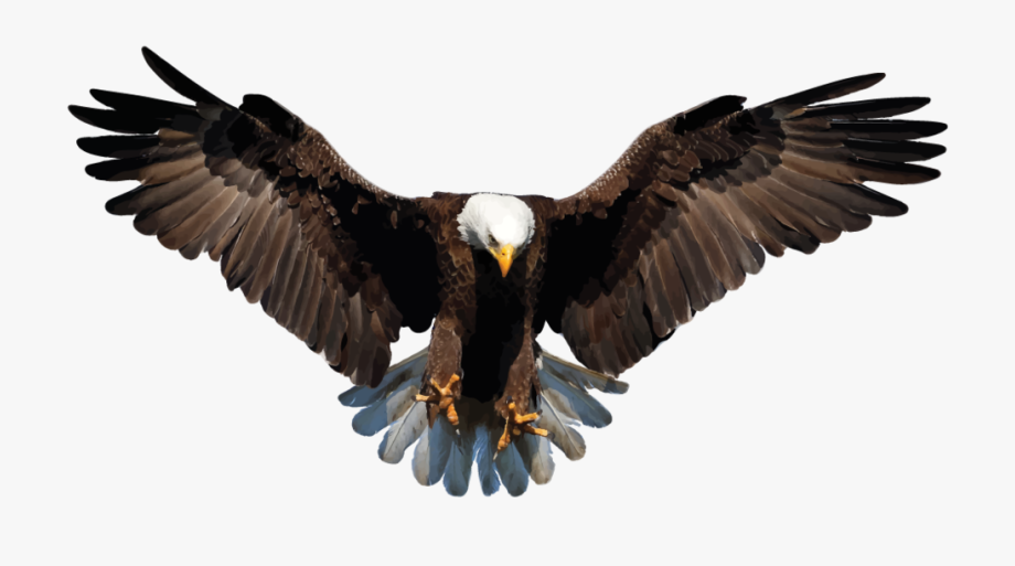 Bald Eagle Clipart Transparent Background.