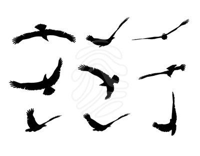Clip art: fly eagle.