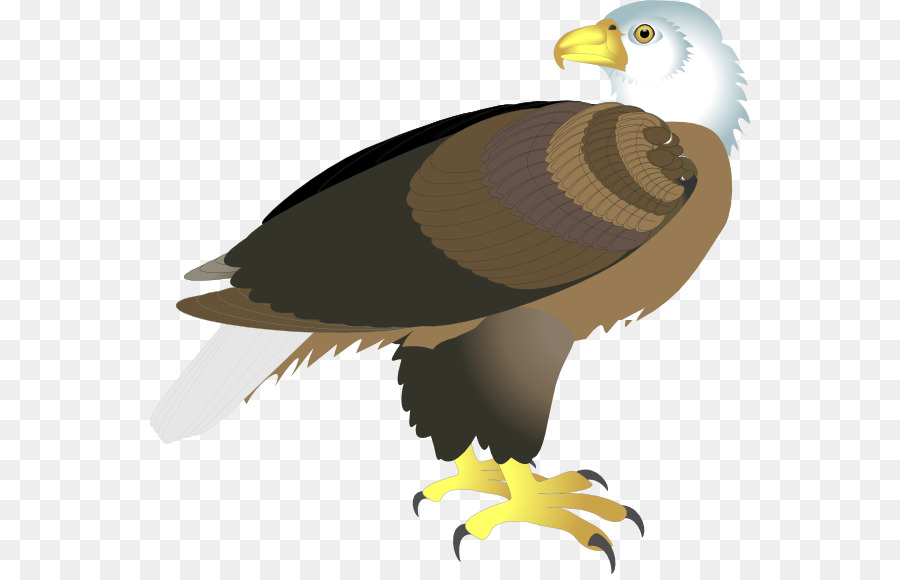 Bald Eagle Clip art.