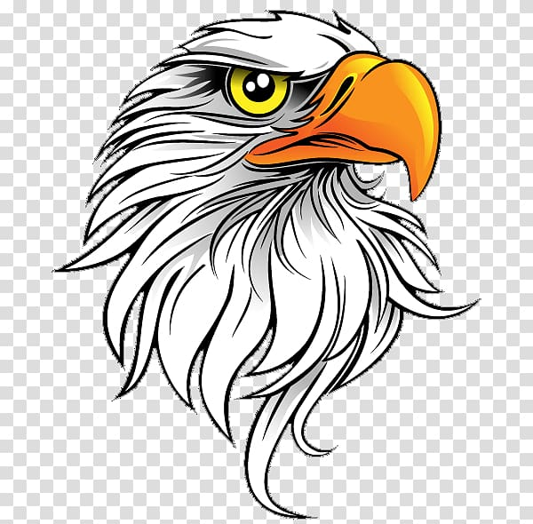 Bald eagle art, Bald Eagle Free content , Eagle Save.