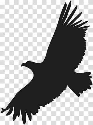 Black and white bald eagle flying art, Eagle Flight Bird, eagle.