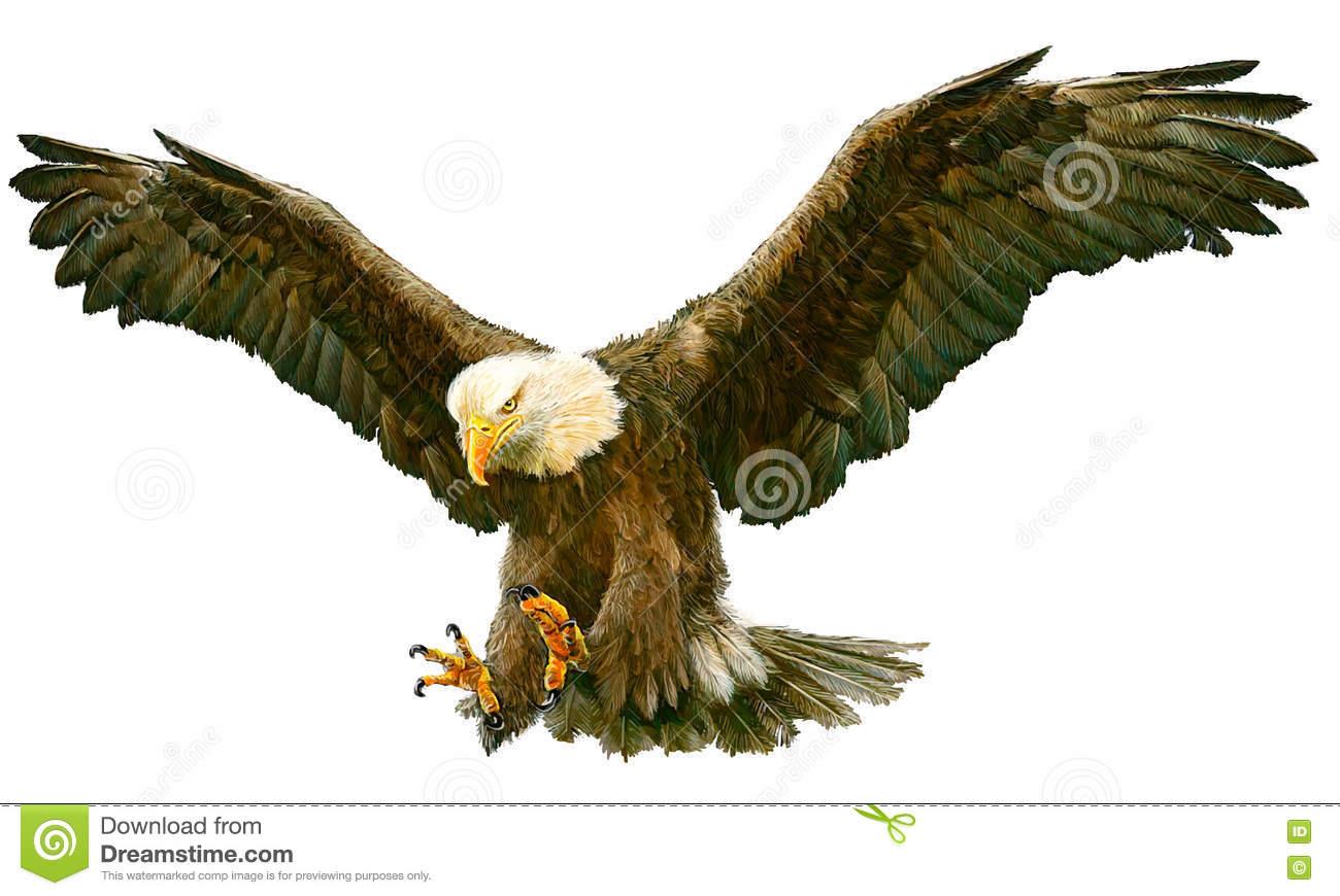 Bald Eagle Landing Swoop Vector. Stock Vector.