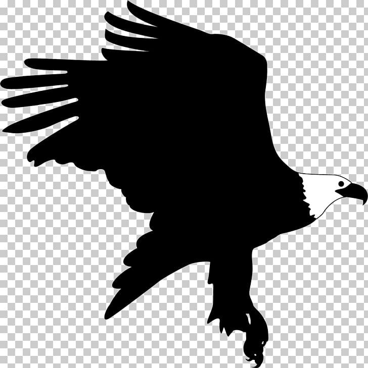 Bald Eagle Bird, Eagle landing PNG clipart.