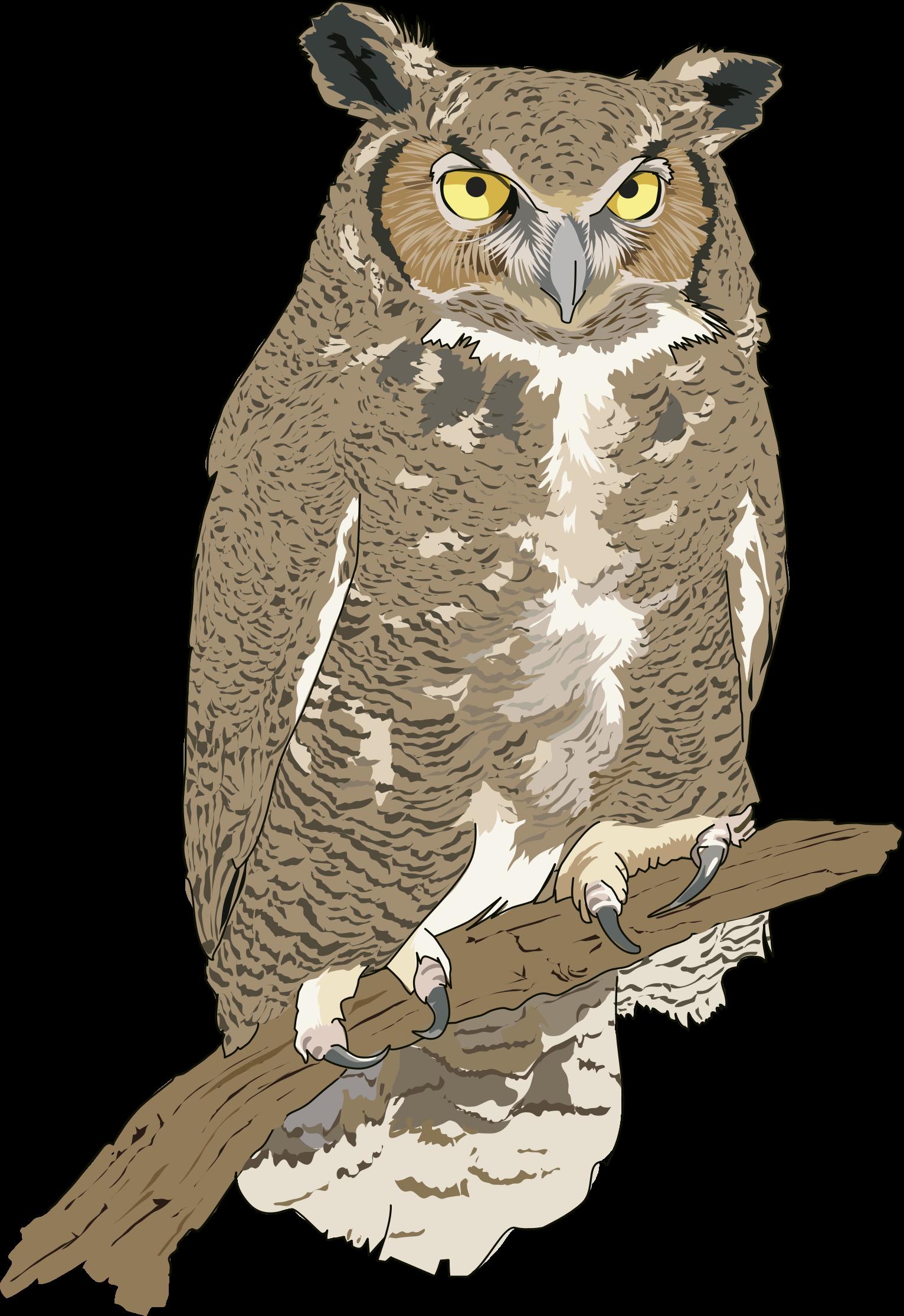 Eagle owl clipart - Clipground