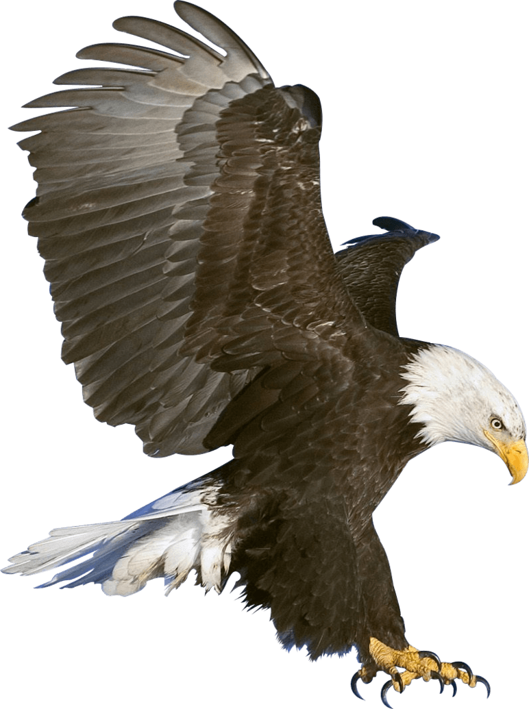 Eagle Claws transparent PNG.