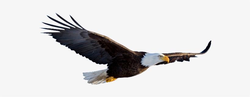 Eagle Png Images Transparent Free Download.
