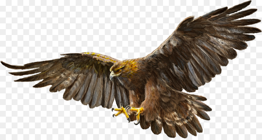Picture Of Eagle Png & Free Picture Of Eagle.png Transparent Images.
