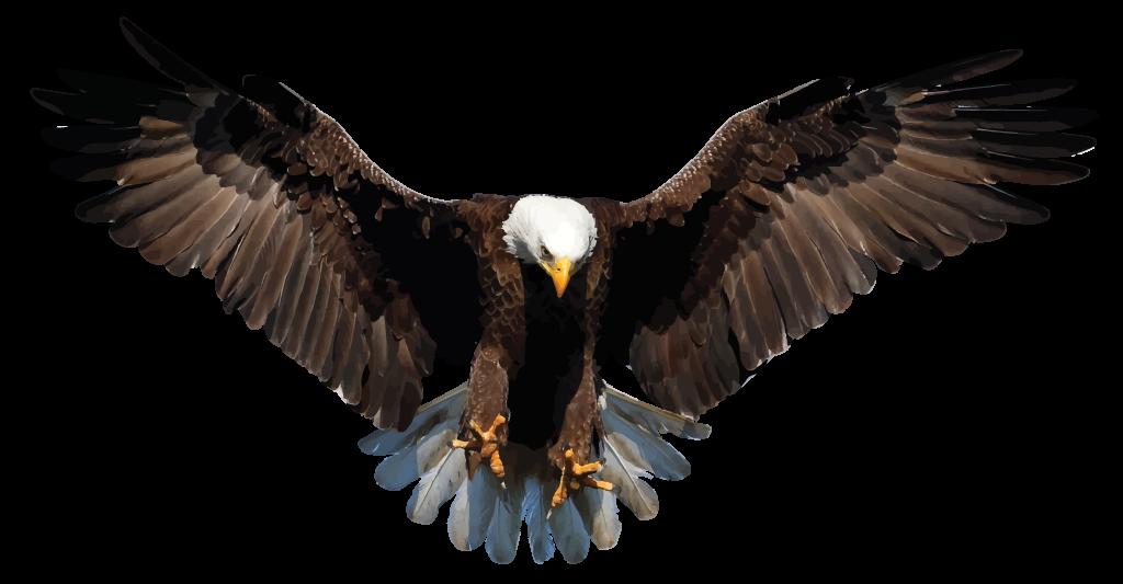 Download Bald Eagle PNG Background Image.
