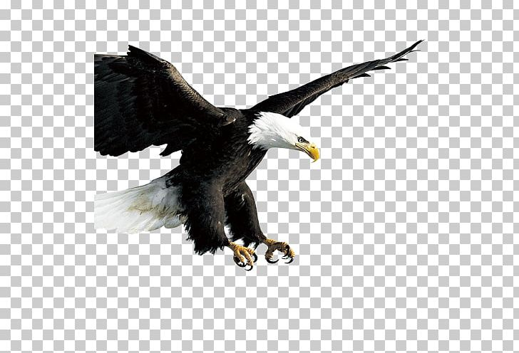 Bird Hawk Icon PNG, Clipart, Accipitriformes, Angle Of View, Animal.