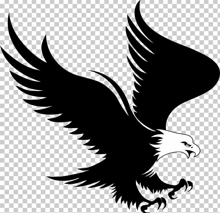 Bald Eagle Logo PNG, Clipart, Animals, Bald Eagle, Beak, Bird, Bird.